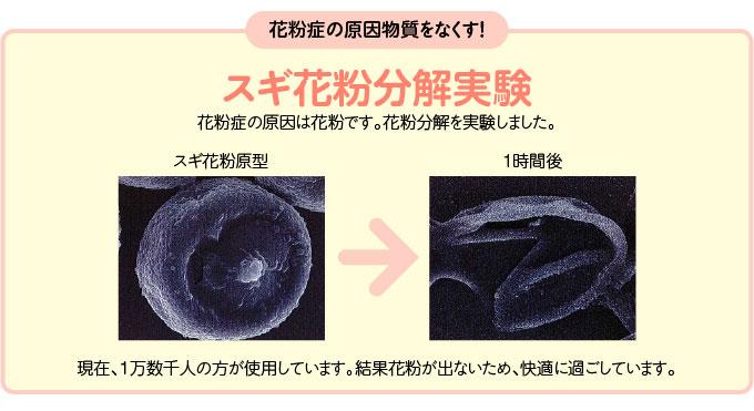 スギ花粉分解実験:花粉症の原因は花粉です。花粉分解を実験しました。